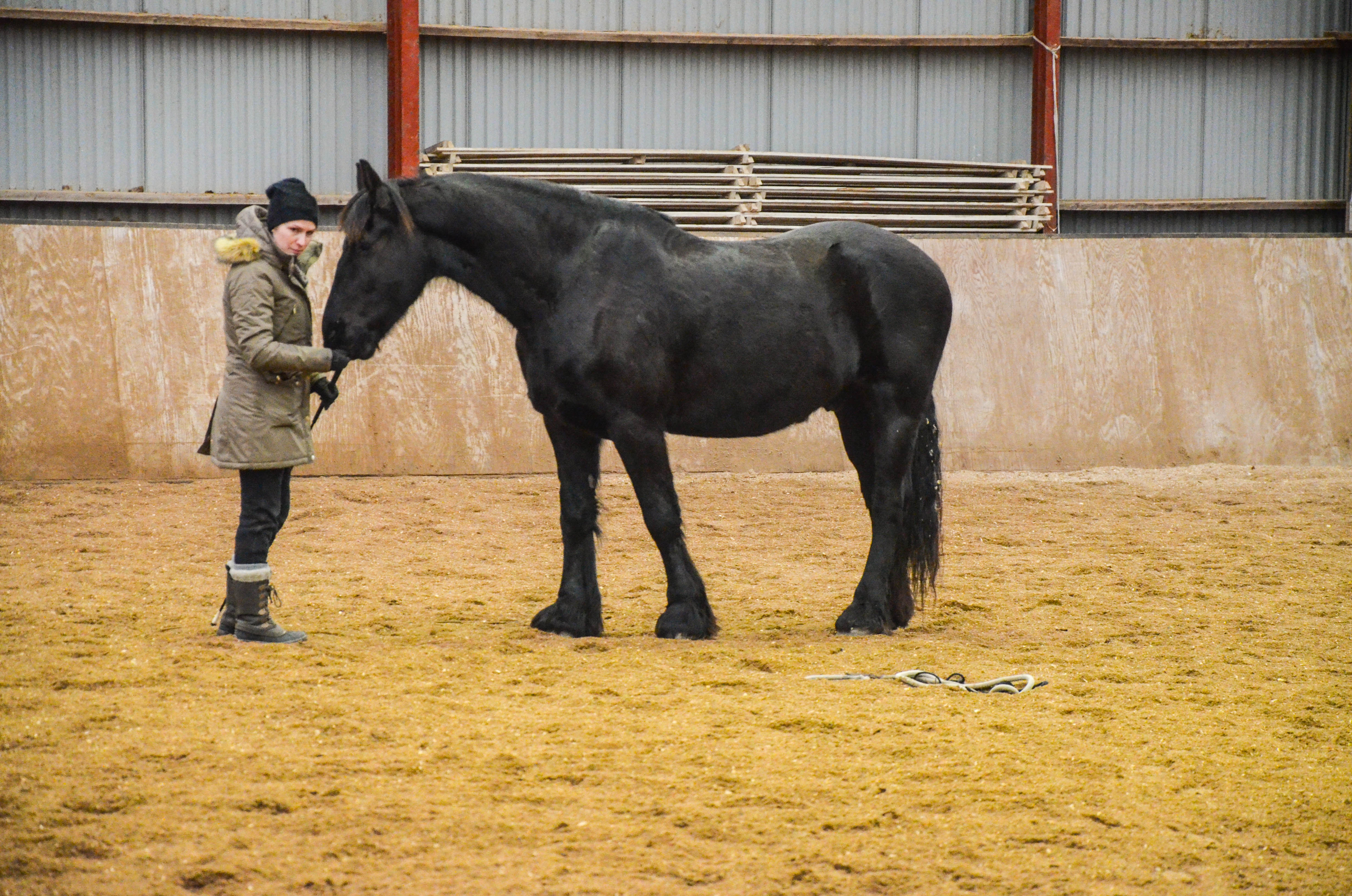 God kontakt er essensielt i et hvert forhold til hest
