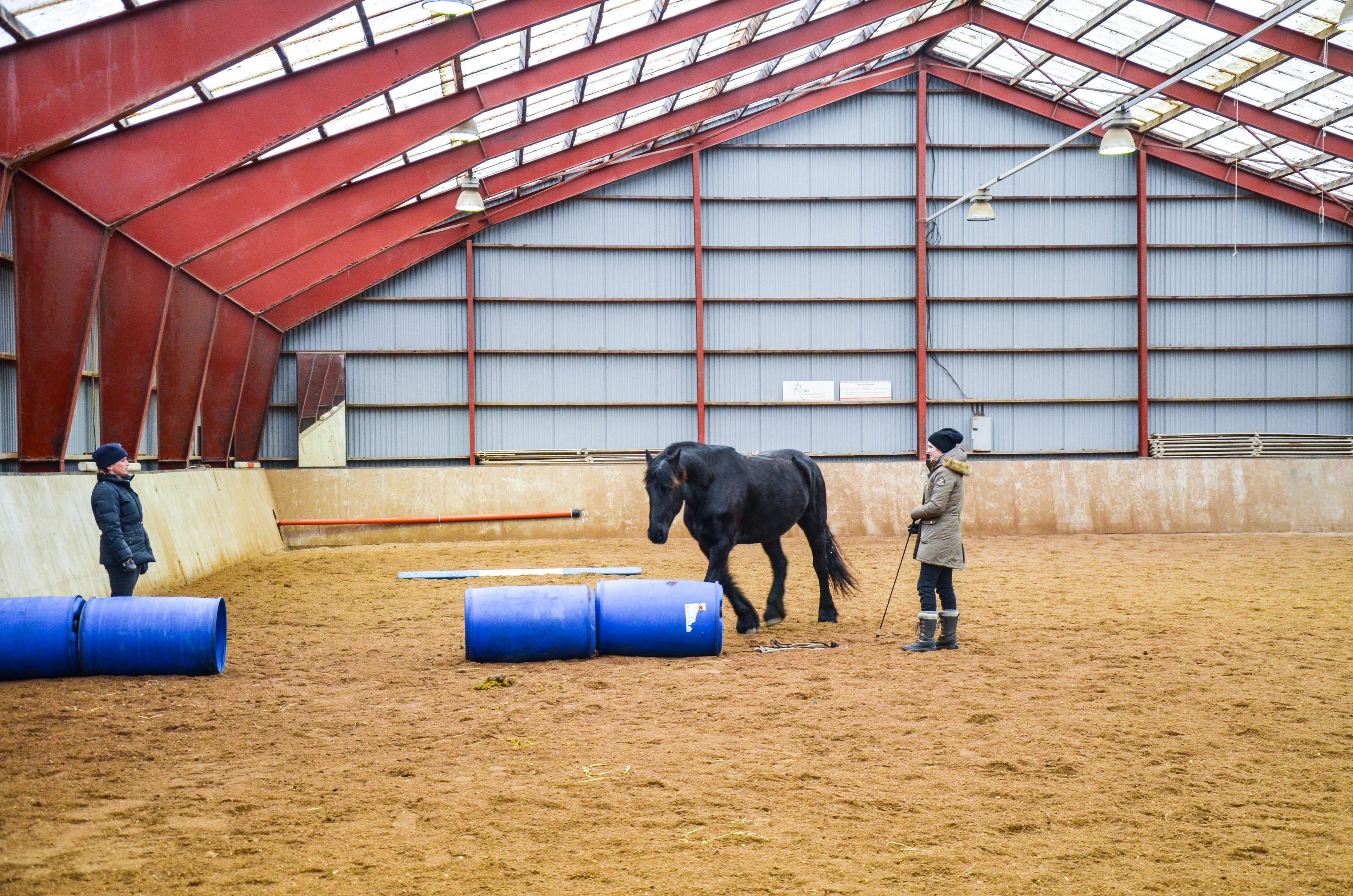 Det er fantastisk å kunne lede en hest kun på energi og fingersignaler!